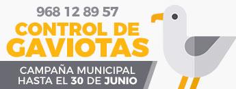 Campaña municipal de control de gaviotas en Cartagena. Hasta el 30 de junio