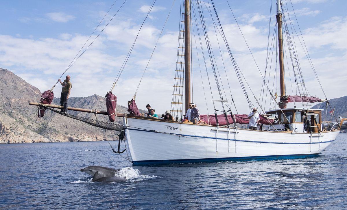 Avistamiento de delfines durante recogida de basuras