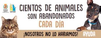 Campaña de sensibilización contra el abandono de mascotas en verano