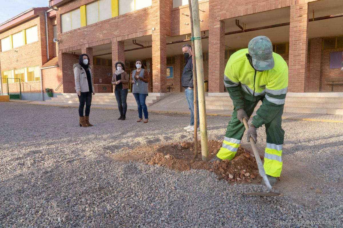 Plantación de árboles en el Colegio Vicente Medina de Los Dolores