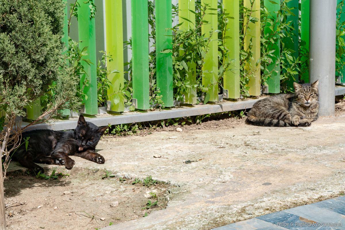 Colonia de gatos ferales