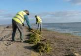 Trabajos de limpieza de algas en las playas del Mar Menor