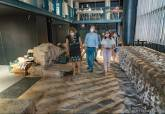 Visita a la colocación de piezas del Museo del Foro Romano