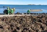 Operarios de limpieza trabajando en Los Urrutias.